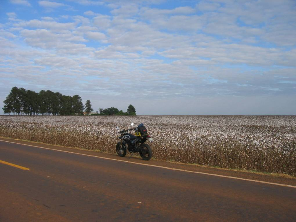 The strength of the Brazilian agriculture is present in the crops of Mato Grosso do Sul. Corn and cotton for the internal market and for exportation.